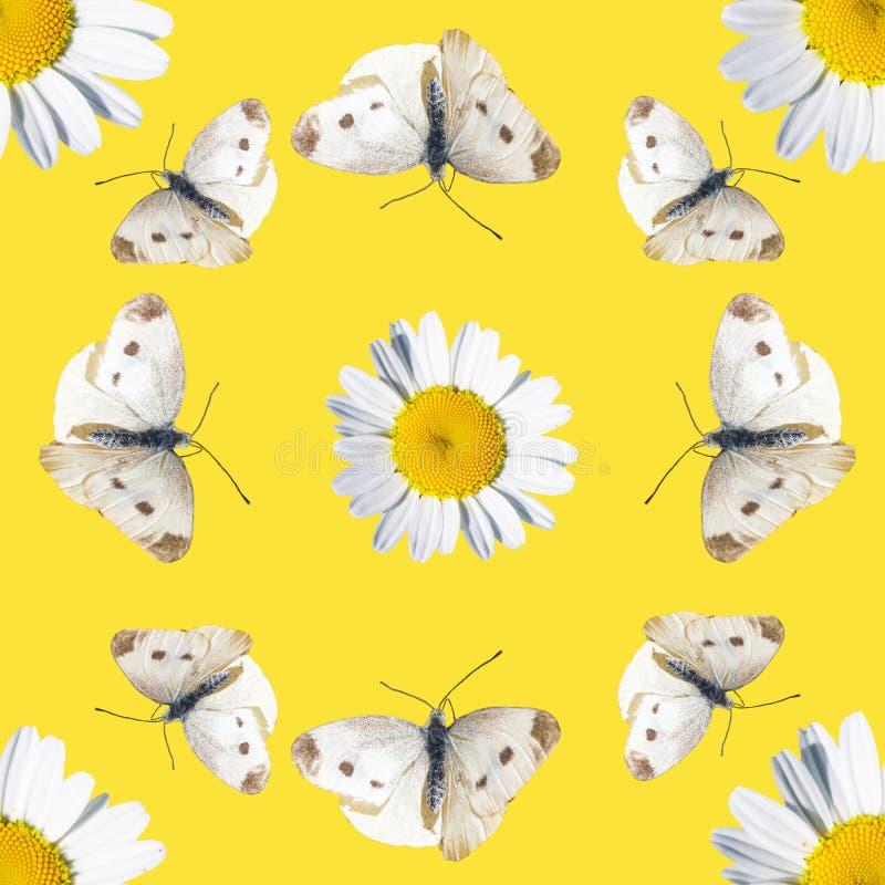 Naadloos patroon met madeliefjes en vlinders royalty-vrije stock fotografie