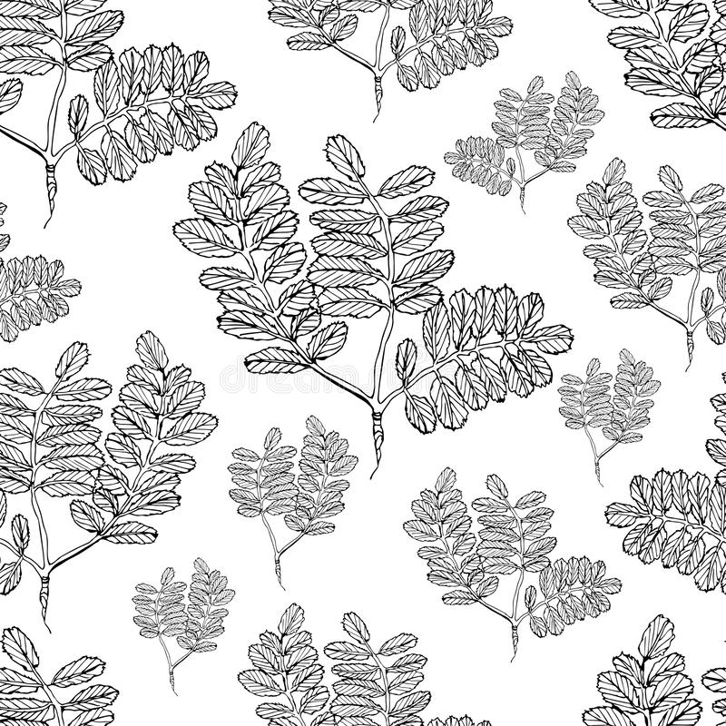 Naadloos patroon met monohcromebladeren van boom van sorbus Hand getrokken die inktschets op witte achtergrond wordt ge?soleerd royalty-vrije illustratie