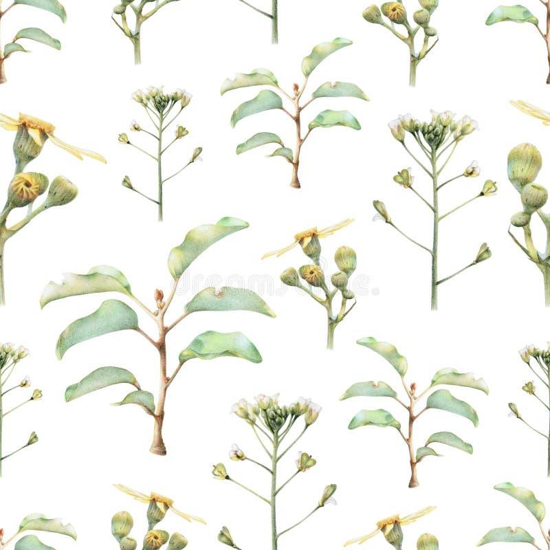 Naadloos patroon met mooie de lentebloemen en installaties stock illustratie