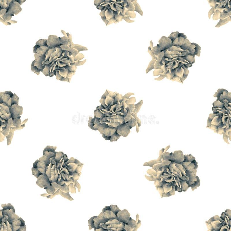 Naadloos patroon met mooie rozen royalty-vrije illustratie