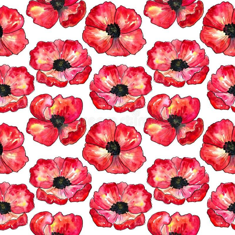 Naadloos patroon met rode papavers Kleurrijke bloemen Waterverfhand getrokken die illustratie op witte achtergrond wordt ge?solee vector illustratie