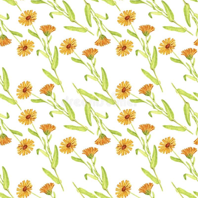 Naadloos patroon met tekeningsinstallatie van calendula stock illustratie