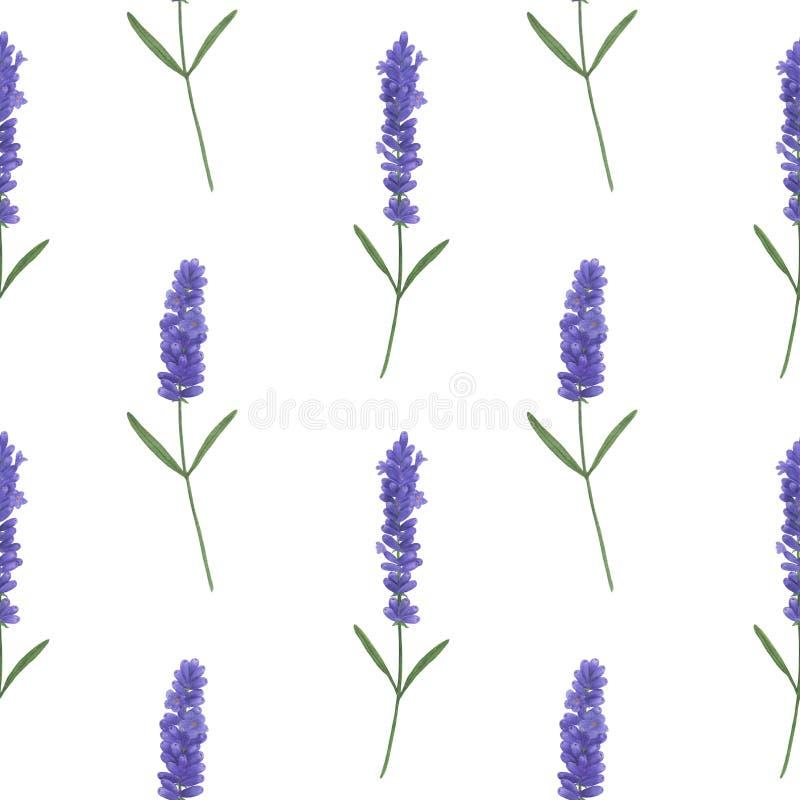 Naadloos patroon met waterverflavendel Illustratie van van het bladtwijgen van de Provence van de texturen met de hand gemaakte b stock illustratie
