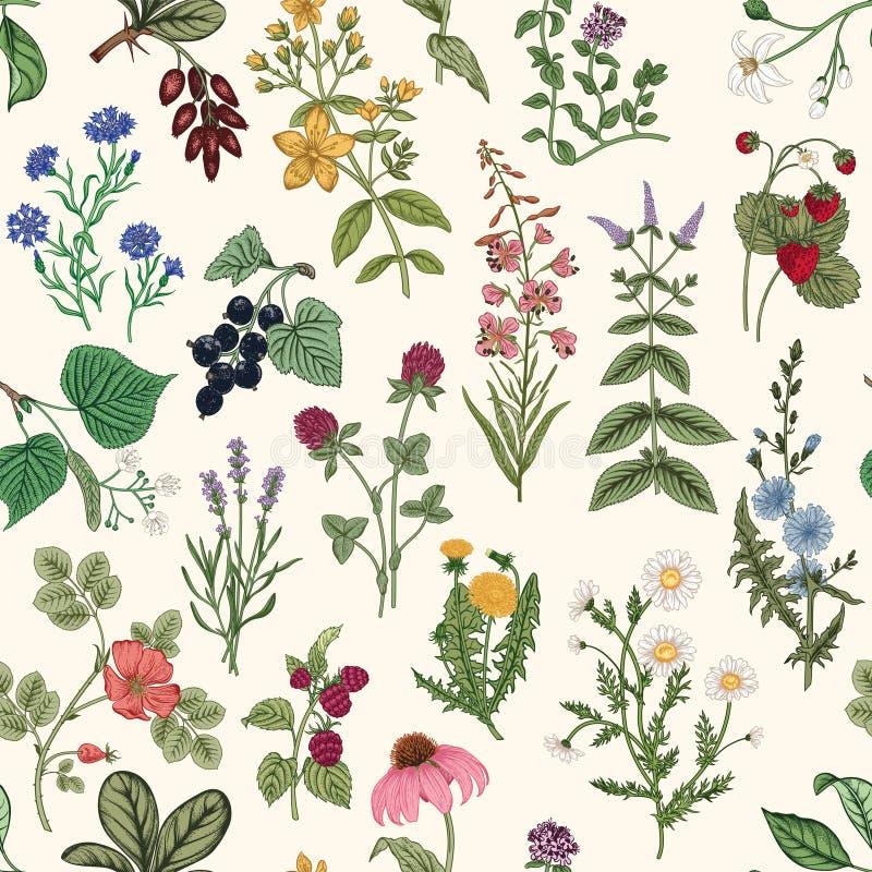 Naadloos patroon met wilde kruiden stock afbeeldingen