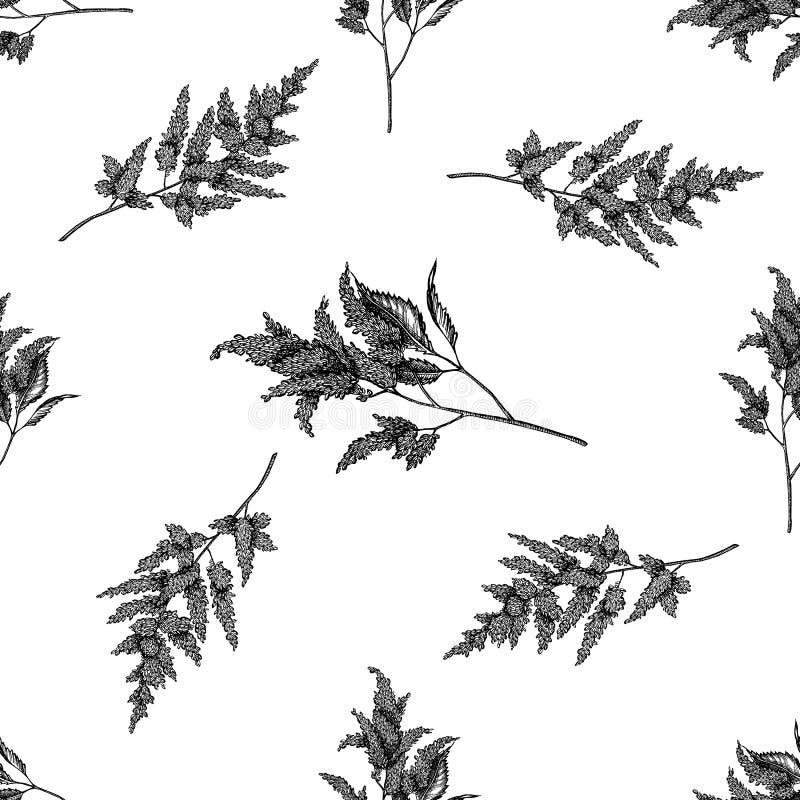 Naadloos patroon met zwart-witte astilbe vector illustratie