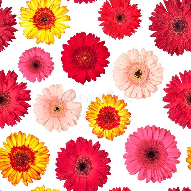 Naadloos Patroon van Trillende Bloemen Gerbera stock fotografie