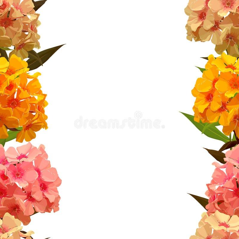 Naadloze achtergrond van roze flox royalty-vrije illustratie