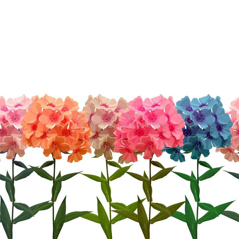 Naadloze achtergrond van roze flox stock illustratie