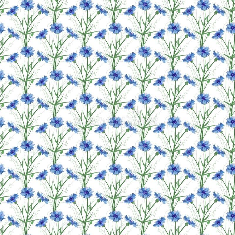 Naadloze achtergrond van wildflowers cornflower Patroon royalty-vrije illustratie