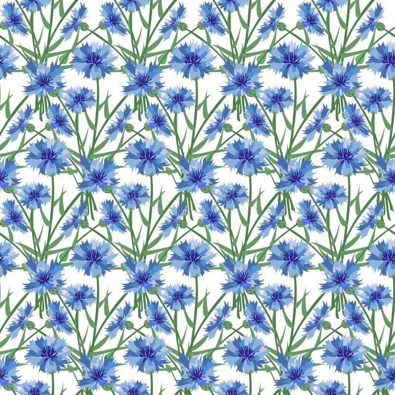 Naadloze achtergrond van wildflowers cornflower Patroon stock illustratie