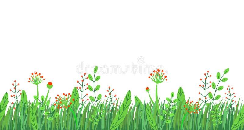 Naadloze de grensvector van het de lentegras Het bloemendieelement van de de aardinstallatie van de wildflowerslente op witte ach vector illustratie