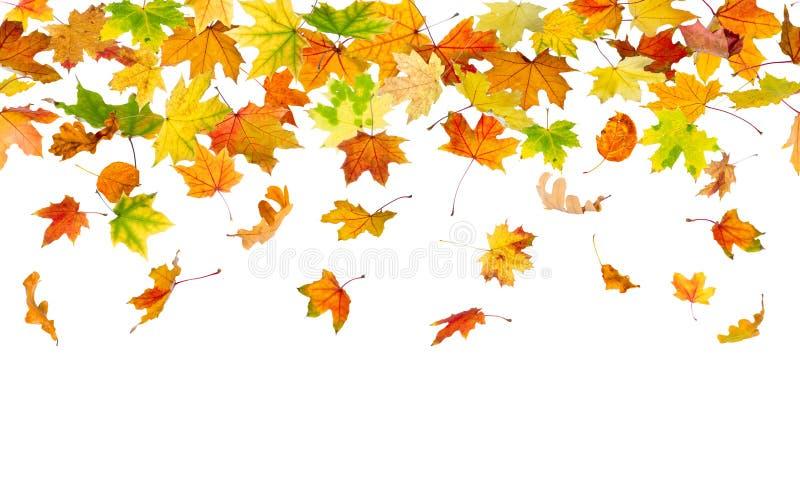 Naadloze de herfstbladeren stock foto's