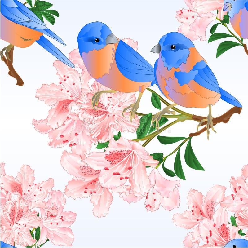 Naadloze editable de Sialialijster van de textuur kleine vogel en de lichtrose uitstekende vectorillustratie van de rododendronta vector illustratie