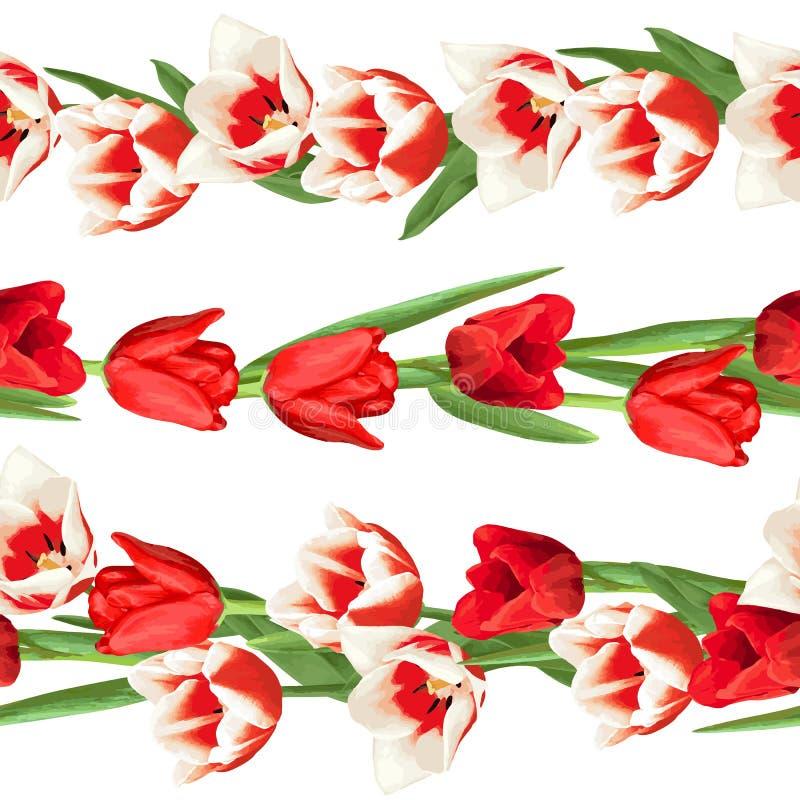 Naadloze grenzen met rode en witte tulpen Mooie realistische bloemen, knoppen en bladeren vector illustratie