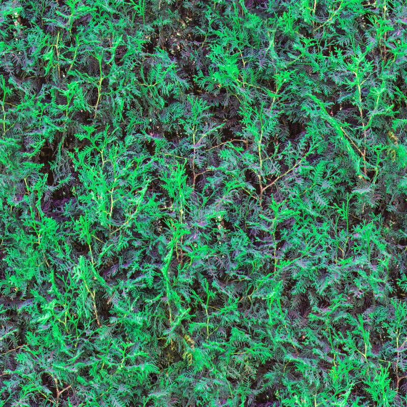 Naadloze groene grasachtergrond Naadloos gras Verse groene van de de vloertuin van het grasmos de textuurachtergrond Aardachtergr stock afbeelding