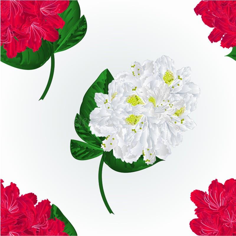 Naadloze het takjevector van de textuur witte en rode rododendron stock illustratie