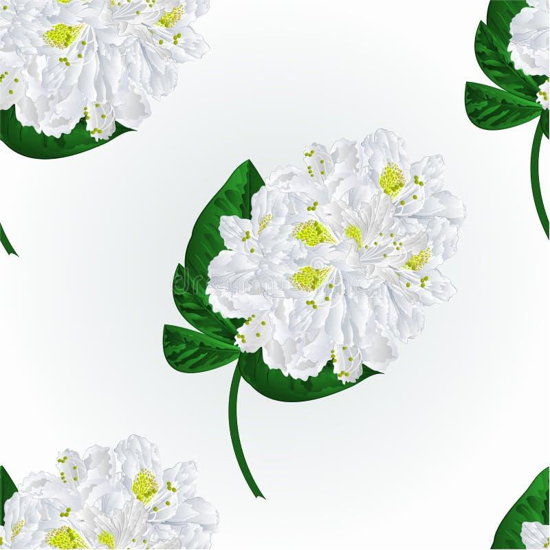 Naadloze het takjevector van de textuur witte rododendron stock illustratie