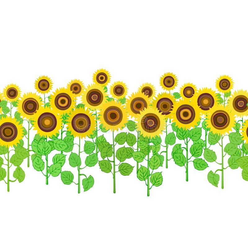 Naadloze horizontale achtergrond van geïsoleerde zonnebloeminstallaties stock foto's