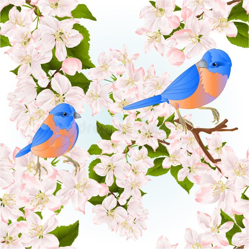 Naadloze kleine de vogelssialia van de textuurlijster op een appelboom met editable bloemen uitstekende vectorillustratie stock illustratie