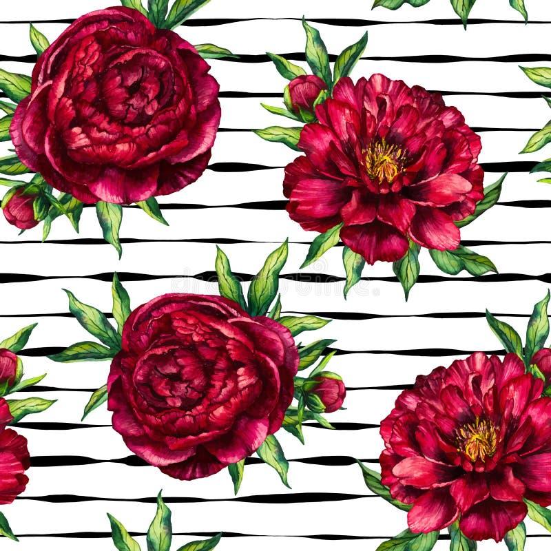Naadloze marsala van de de bloempioen van de patroonwaterverf op zwarte gestreepte achtergrond royalty-vrije illustratie
