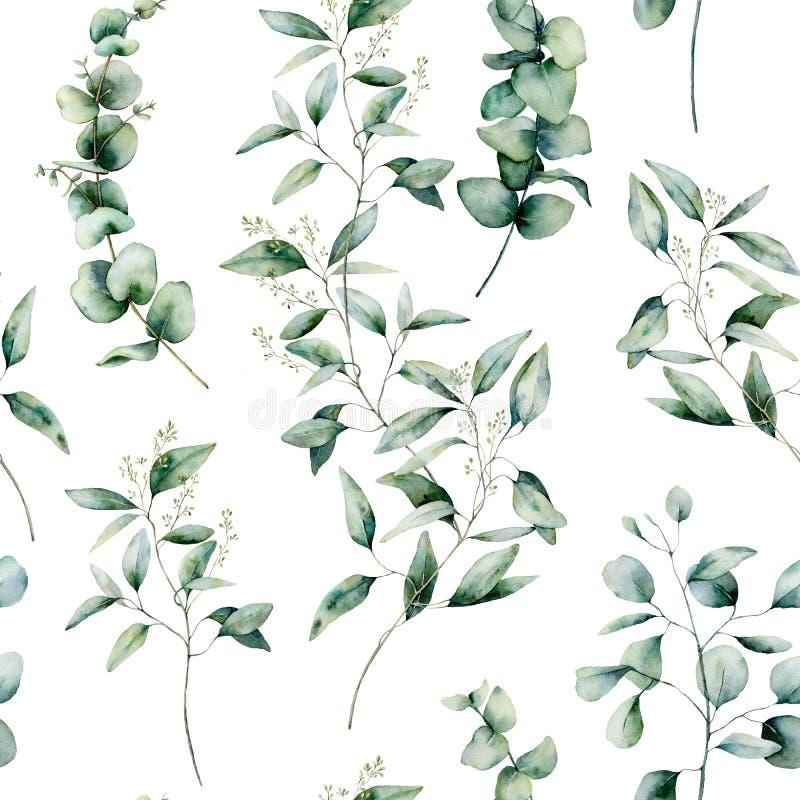 Naadloze patroon van de waterverf het verschillende eucalyptus Hand geschilderde die eucalyptustak en bladeren op witte achtergro stock illustratie