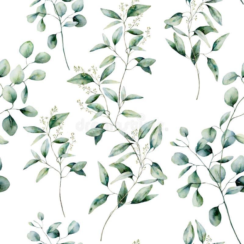 Naadloze patroon van de waterverf het verschillende eucalyptus op witte achtergrond Hand geschilderde ge?soleerde eucalyptustak e vector illustratie