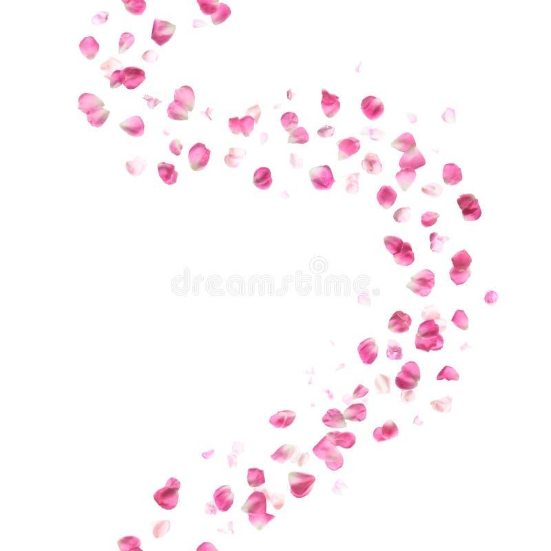 Naadloze Roze Rose Petals Pattern royalty-vrije stock foto's