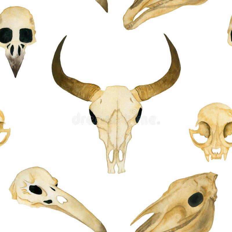 Naadloze waterverfillustratie Schedel van een stier, schedel van een kat, schedel van een kraai, schedel van een paard stock illustratie