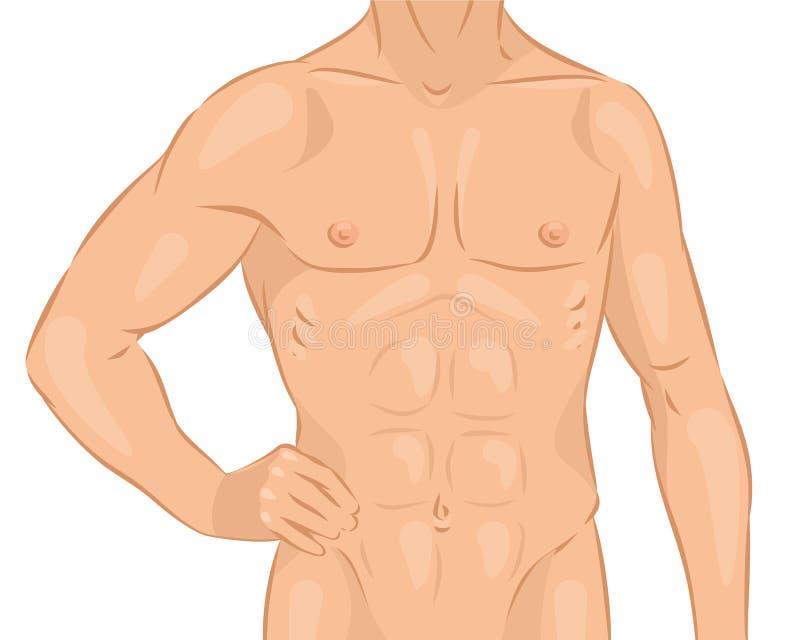 Naakt mannelijk lichaam vector illustratie
