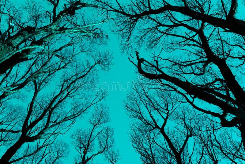 Naakt takkensilhouet tegen cyaan blauwe hemel stock foto