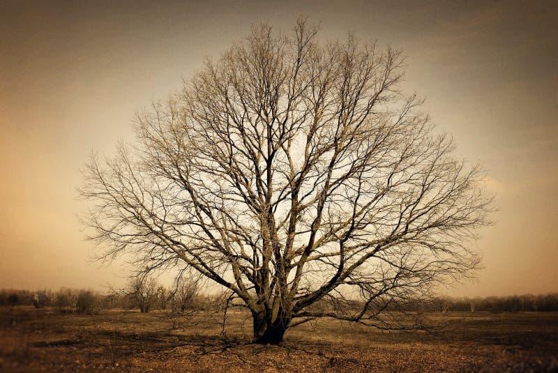Naakte alleen boom op donkere achtergrond stock foto's