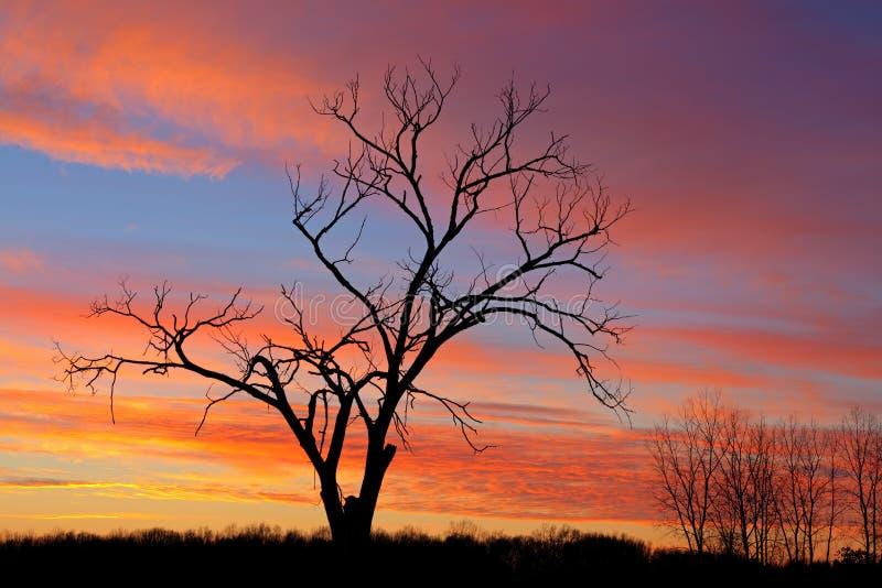 Naakte Bomen in Dawn stock foto's