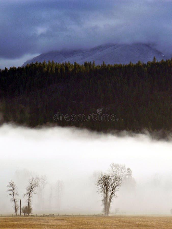Naakte bomen die in mist worden gehuld royalty-vrije stock foto's