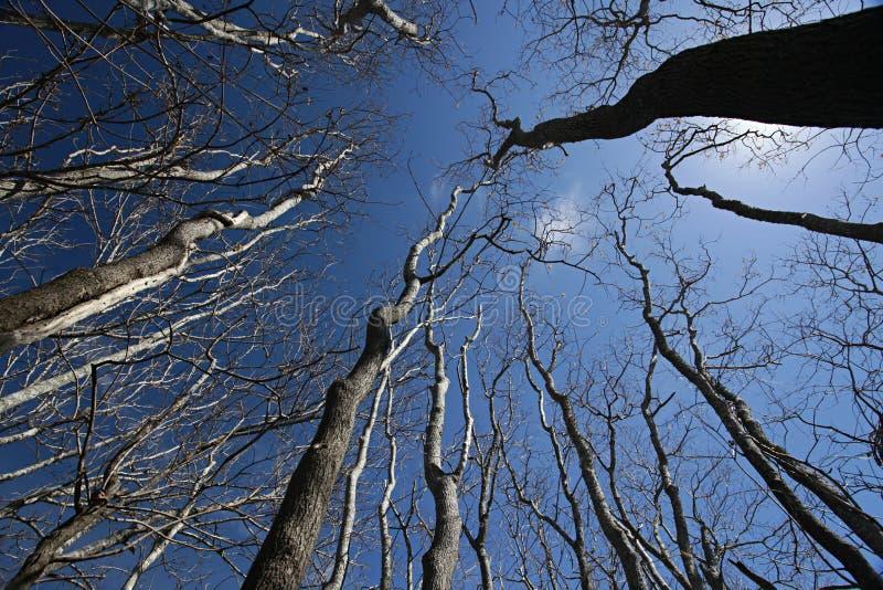 Naakte bomen die voor de diepe blauwe hemel bereiken royalty-vrije stock afbeeldingen