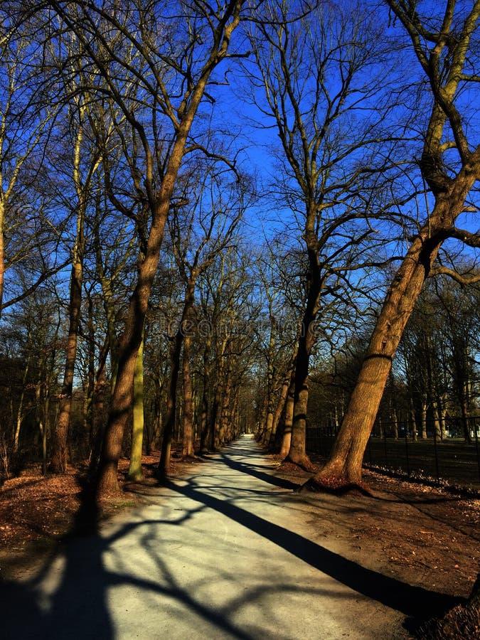Naakte bomen in een park royalty-vrije stock foto