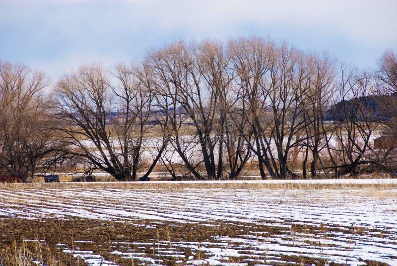 Naakte Bomen en Gelaagde Achtergrond royalty-vrije stock fotografie