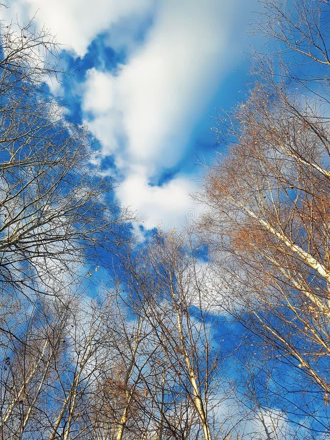 Naakte bomen op hemelachtergrond met wolken in het de lente bosweergeven van de bodem royalty-vrije stock foto's