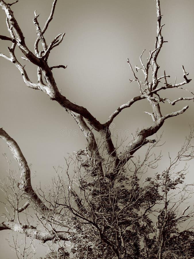 Download Naakte boom stock foto. Afbeelding bestaande uit winter - 284630