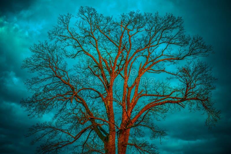 Naakte boom, blauwe hemel royalty-vrije stock afbeeldingen