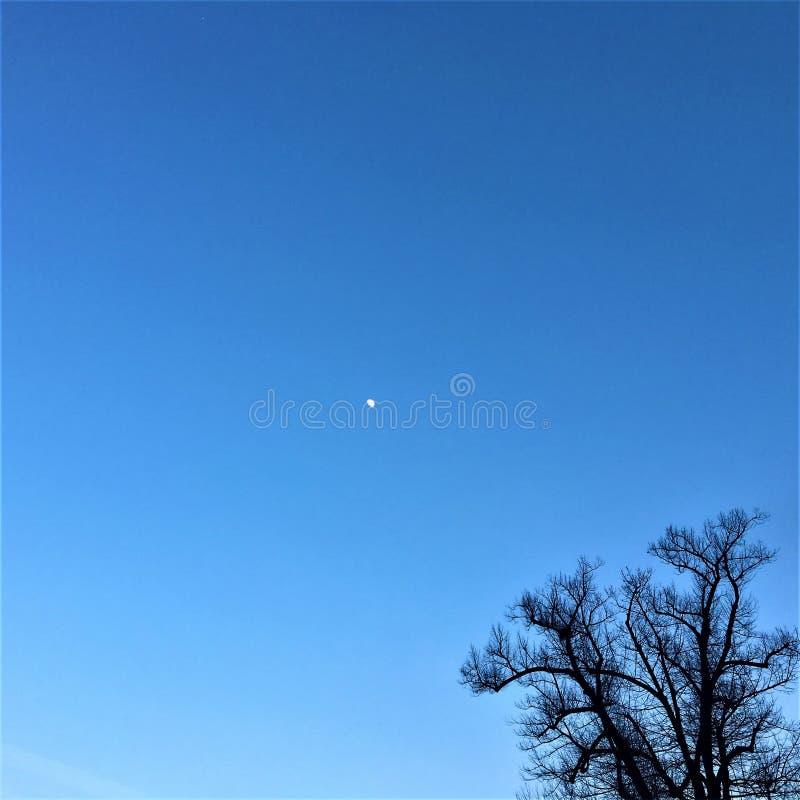 Naakte boom, hemel, heelal en maanlicht stock afbeeldingen