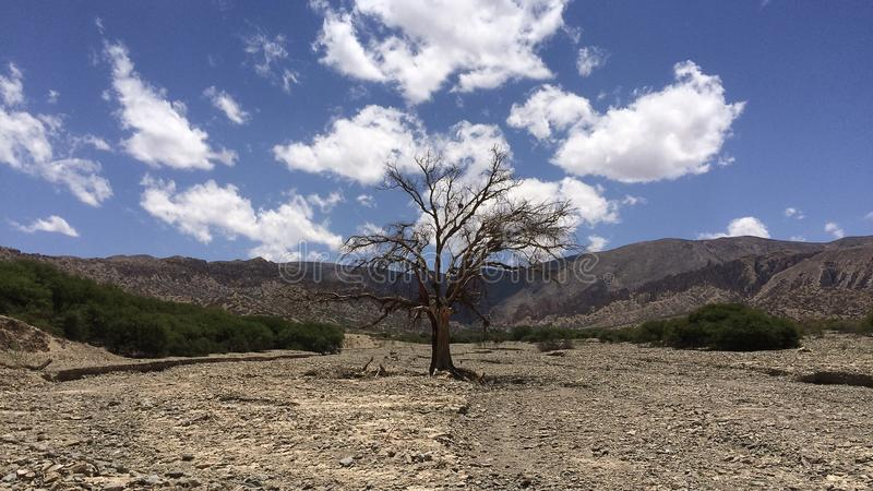 Naakte boom in het midden van woestijnlandschap, zuidelijk Bolivië stock afbeelding