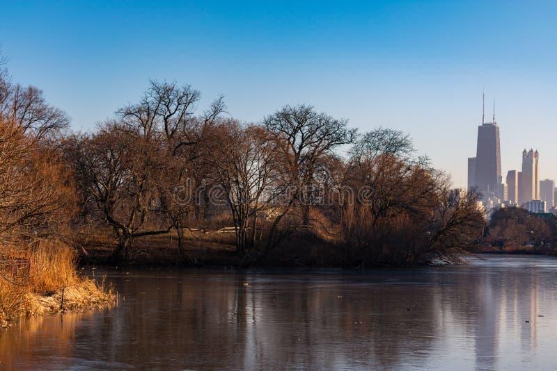 Naakte de Winterbomen langs het Noordenvijver met de Horizon van Chicago in Lincoln Park stock afbeeldingen