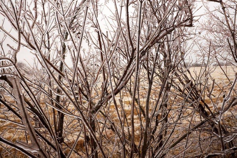 Naakte die takken van een boom in ijs met een laag wordt bedekt royalty-vrije stock fotografie