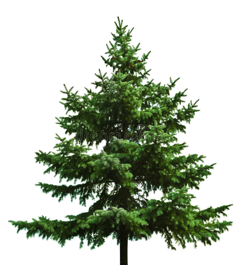 Naakte Kerstboom royalty-vrije stock afbeelding