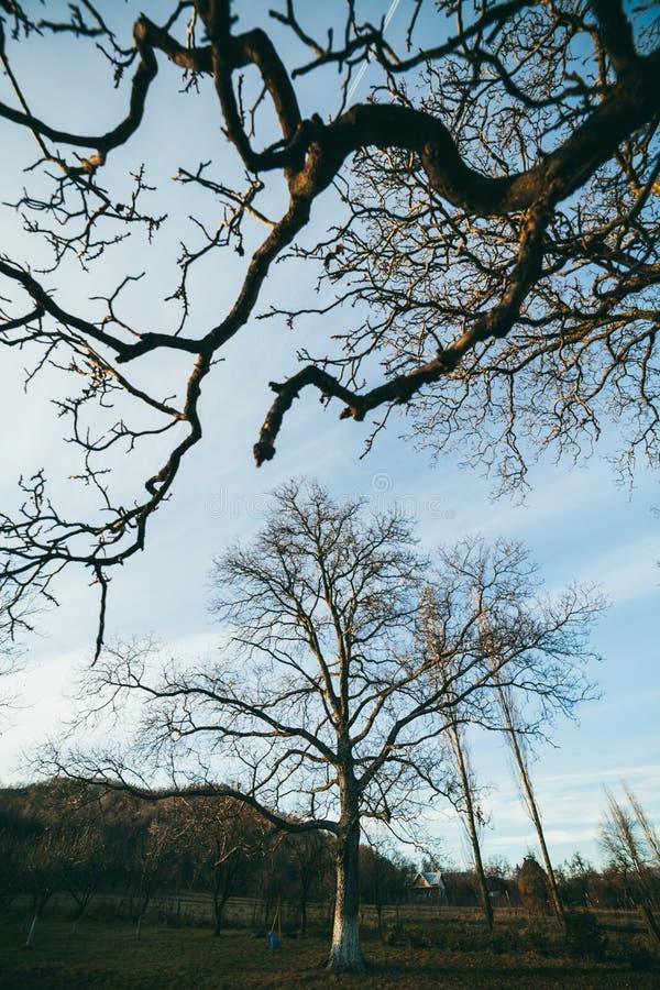 Naakte takken in bomen stock foto's