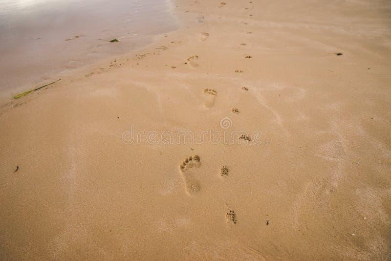 Naakte voetafdrukken van mens en een kleine die hond op nat zand wordt gelopen beac royalty-vrije stock afbeelding