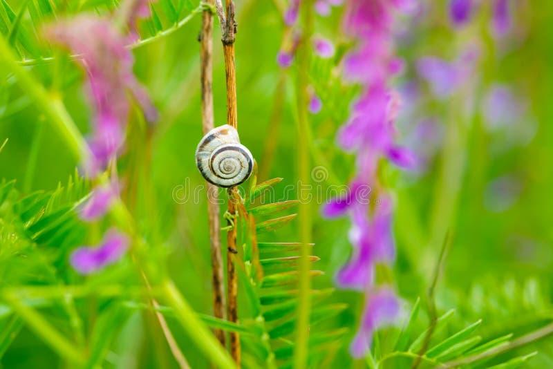 Naaktslak in gras tussen purpere bloemen royalty-vrije stock afbeeldingen