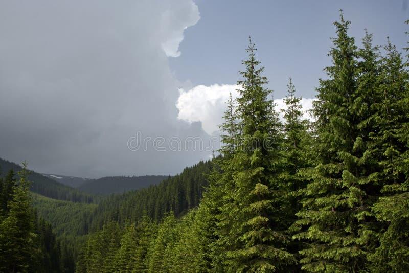 Naald Bos op de Berg royalty-vrije stock foto's
