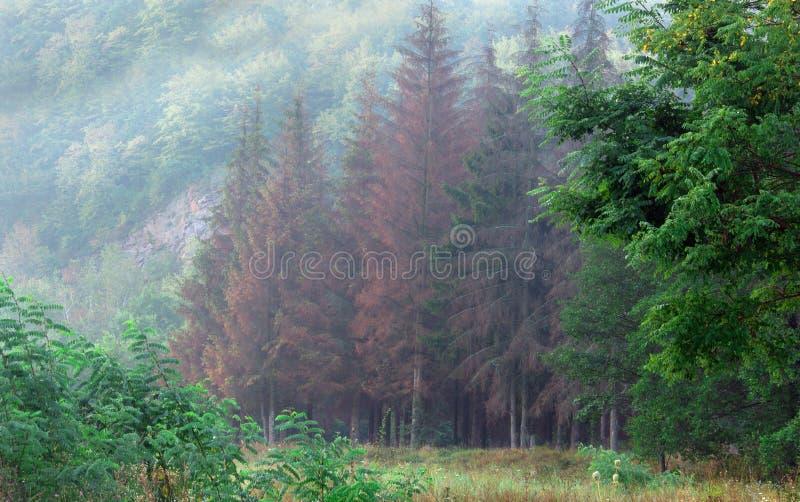 Download Naald boslandschap stock foto. Afbeelding bestaande uit mist - 39105428