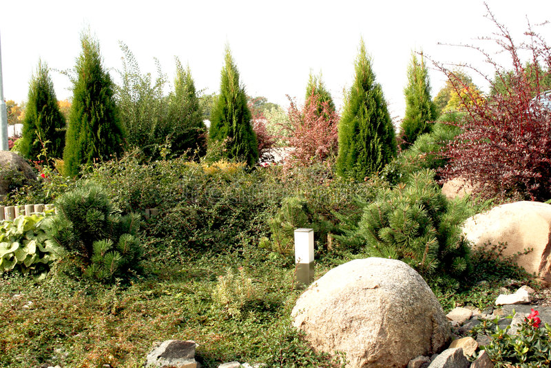Naald tuin stock afbeelding